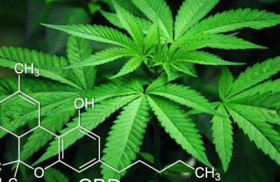3 Top-CBD Aandelen Uit De Legale Marihuana-sector