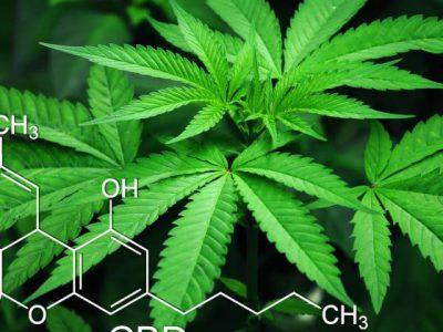 3 Lacagta Top-CBD Laga soo bilaabo Qaybta Sharciga ee Marijuana