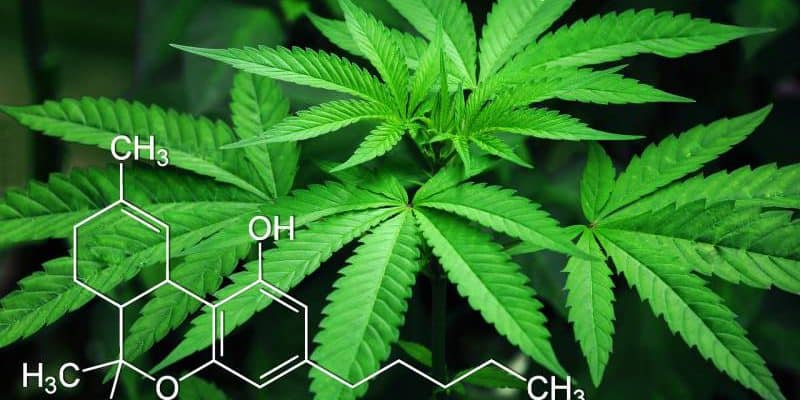Beşên 3 Top-CBD Ji Ji Qada Marijuana Qanûn