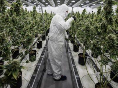 Canadese Cannabisproducent Canopy Gaat Wiet Kweken In Europa