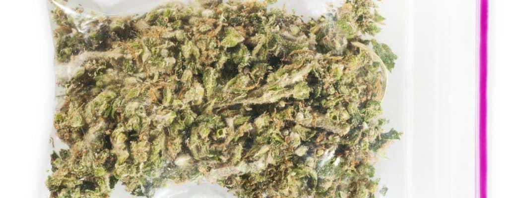 'Cannabis Zal Vroeg Of Laat Legaal Worden'
