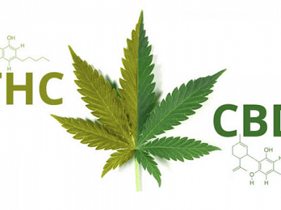 2018-12-18-Internationale Ontwikkelingen Rond CBD En Cannabis