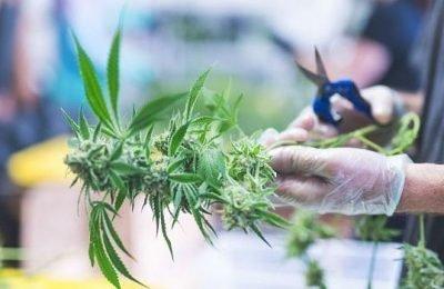 2018-12-4-Hoe Gevaarlijk Zijn Cannabisaandelen?