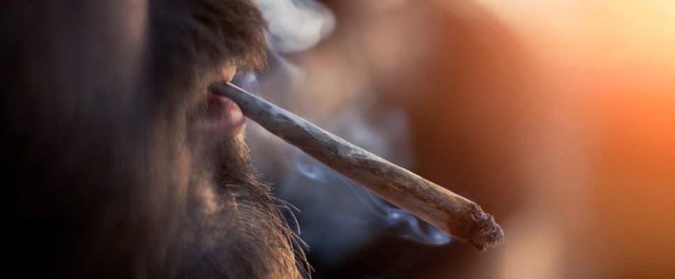 Cannabis Is Nu Twee Keer Zo Sterk Als Elf Jaar Geleden, Zegt De Studie
