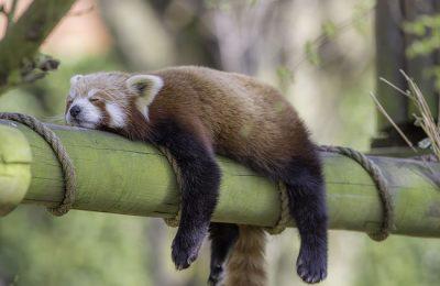 Cannabis Goed In Bed? Bevordert Diepe Slaap En Rust.