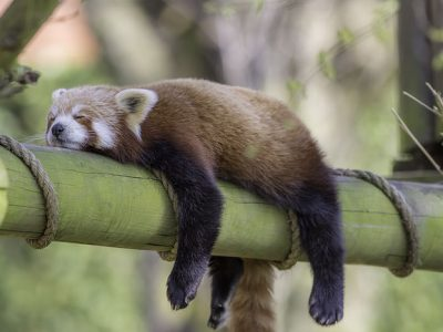 Kanabis je dobro u krevetu? Promovira dubok san i odmor.