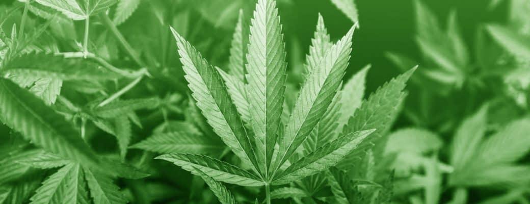 Marihuana Aandeel Aurora Cannabis Stijgt Nadat Het Whistler Medical Marijuana Heeft Gekocht