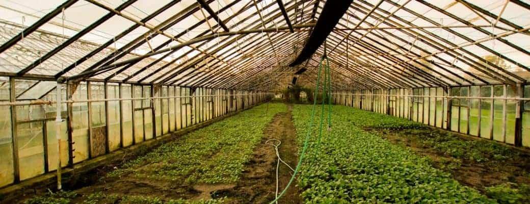 Tuinbouw Innovatie En Mediwiet Op GreenTech Amsterdam