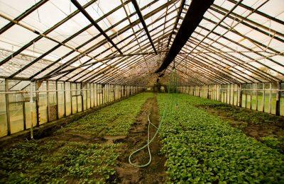 2019-03-04-Hortikulturna inovacija i Mediwiet u GreenTech Amsterdamu