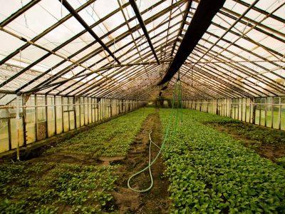 2019-03-04-Tuinbouw Innovatie En Mediwiet Op GreenTech Amsterdam