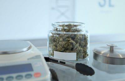 Hoger Onderwijs: Cannabis Als Hbo-opleiding