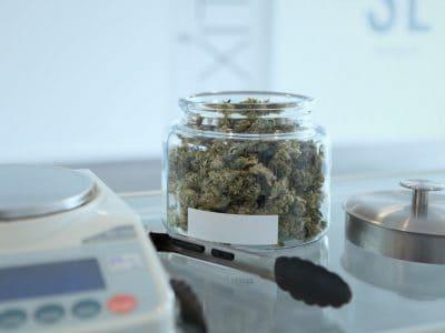 Felsőoktatás: Kannabisz Főiskolai oktatás