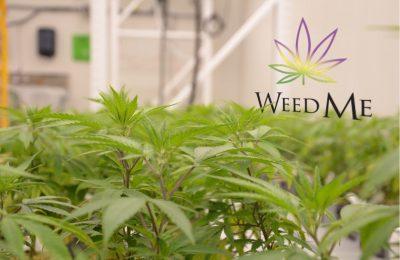 Weed Me, Een Canadese Cannabisproducent, Maakt Een Enorme Omzetgroei Mee.