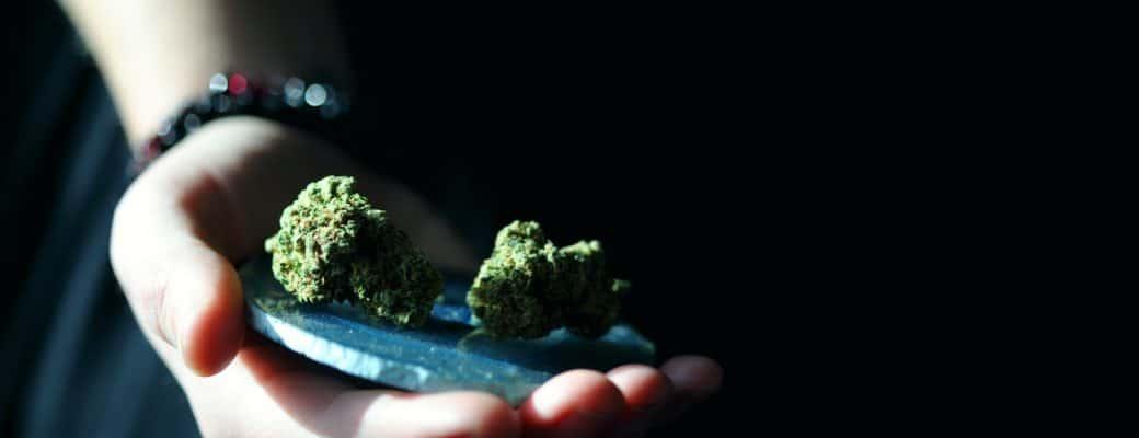 Patiënt Zegt Dat Ze Haar Eigen Cannabis Zal Kweken Omdat Het Te Duur Is Op Recept