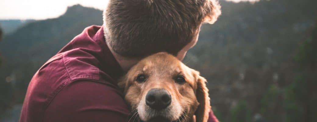 Huisdieren Zijn De Nieuwe, Populaire Cannabisklanten, Eigenaren Gebruiken CBD Om Pijn En Angsten Te Verlichten