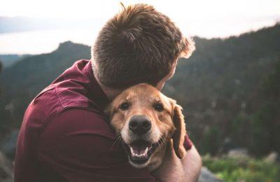 Kućni ljubimci su novi, popularni kupci kanabisa, jer vlasnici koriste CBD da ublaže bol i anksioznost