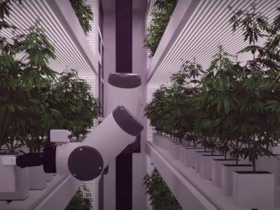 2019-06-25-Eerste Volledig Geautomatiseerde Cannabiskwekerij Ter Wereld
