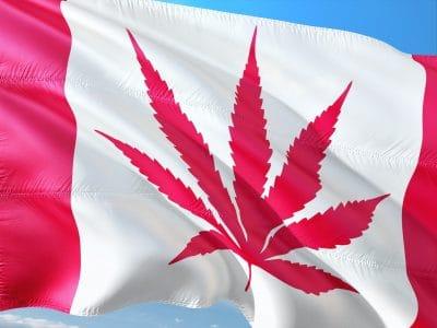 2019-06-28-VS Vormt De Grootste Bedreiging Voor De Bloeiende Cannabisindustrie In Canada