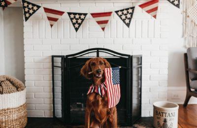 CBD-olie Voor Huisdieren: Hoe Veilig Is Het?