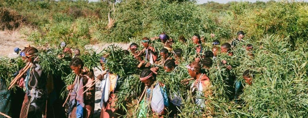 Het Zuid Afrikaanse Land Lesotho Verzilvert De Medicinale Cannabis Hype Met Nieuwe Britse CBD-fabriek