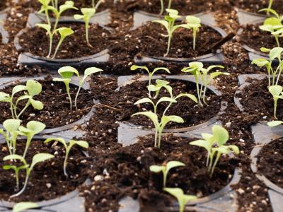 /Users/mjo/Google Drive/Documenten/Oosterom & Co/Client/Prio Holding/Sites/DrugsInc.eu/Nieuws/2019-08-06-Canopy's Growth Kwartaal Resultaten Komen Eraan. Wat Kunnen We Verwachten?.png