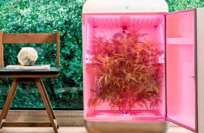 Medicinaal Cannabisbedrijf Seedo Met Distributiecentrum In Rotterdam Sluit Overeenkomst Om Zijn Apparaat In Europa Te Verkopen