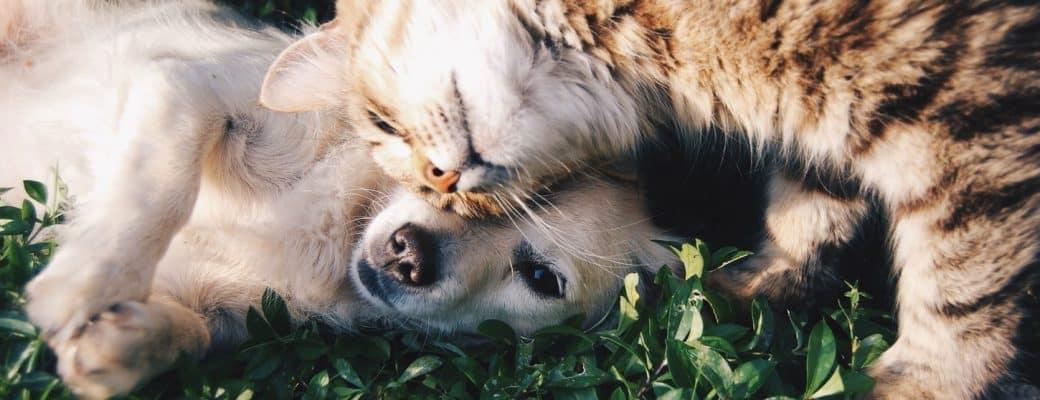 Svjetski dan životinja: Šta CBD ulje može učiniti za zdravlje životinja?
