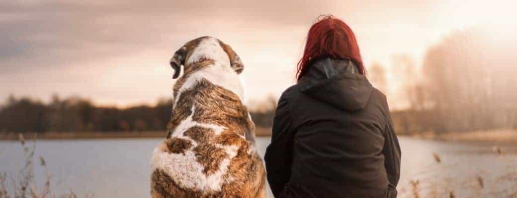 Universiteit In Canada Onderzoekt Hoe Cannabis Kan Helpen Bij De Bestrijding Van Kanker Bij Honden