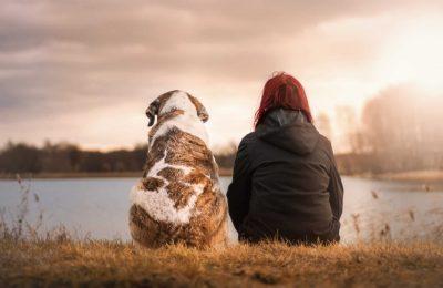 2019-11-01-Universiteit In Canada Onderzoekt Hoe Cannabis Kan Helpen Bij De Bestrijding Van Kanker Bij Honden