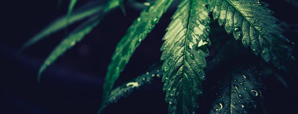 Amerikaans Congrescomité Neemt Wetgeving Aan Om Cannabis Te Decriminaliseren Op Federaal Niveau