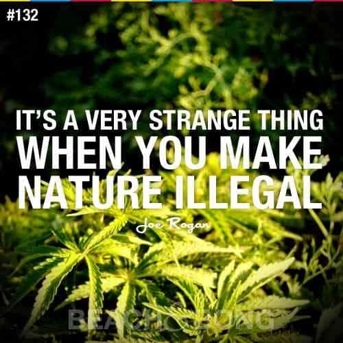 2019 12 25 Funny thing make nature illegal