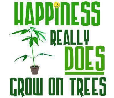 2019 12 25 Happiness grows on trees