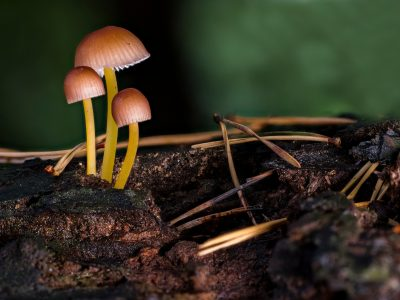 2019-12-30 Funghi sicuri per il consumo umano