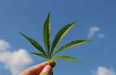 2020-01-03-Minder Medicinale Cannabis In 2019