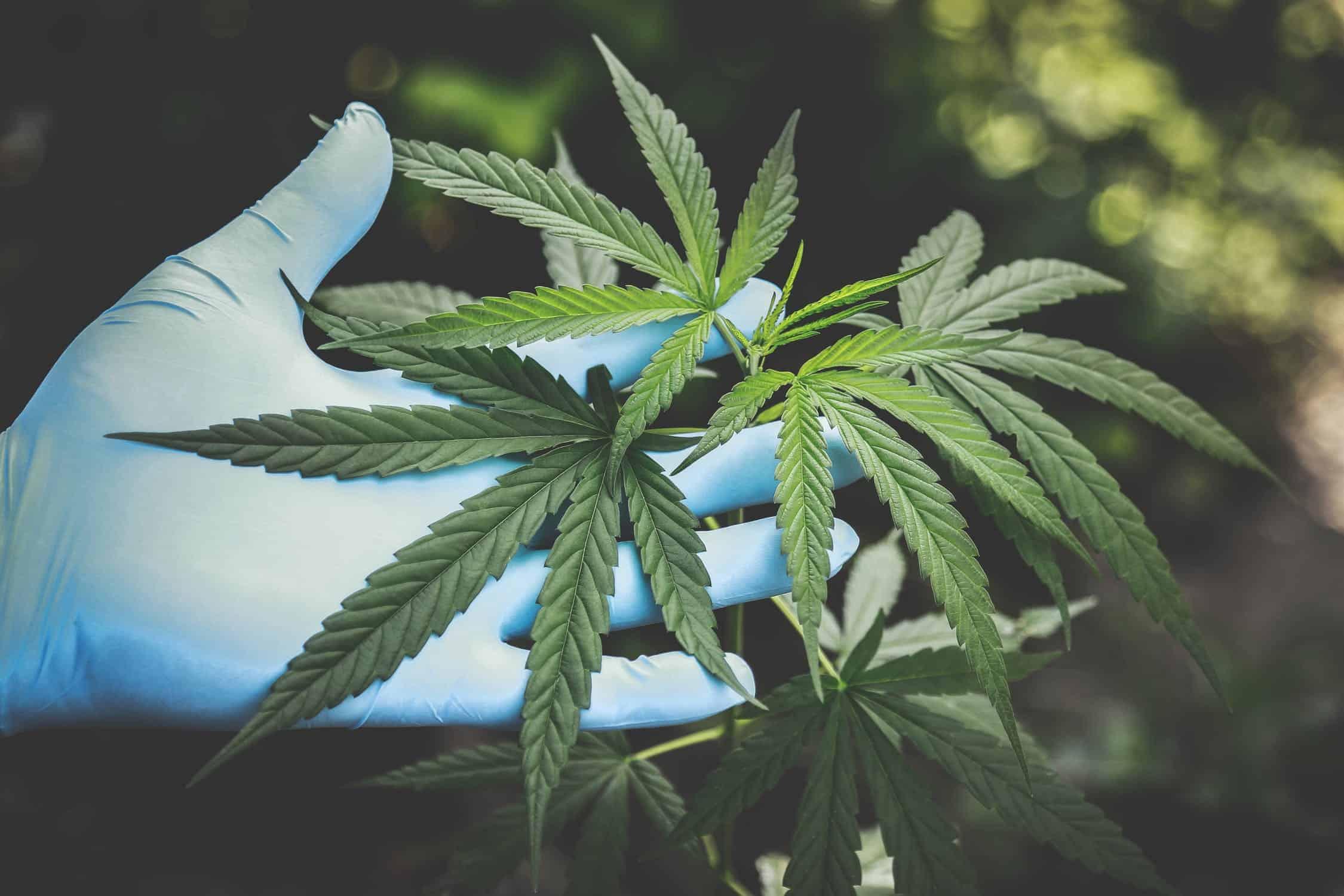 Отчет конопля тату с изображением марихуаны