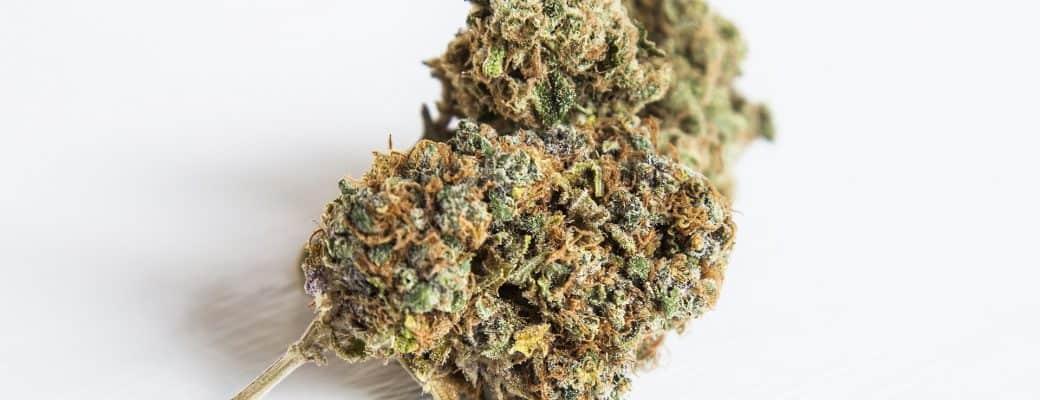 Aurora Cannabis-aandelen Kelderen