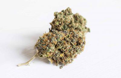 2020-02-06-Aurora-Cannabis-stock-plunging