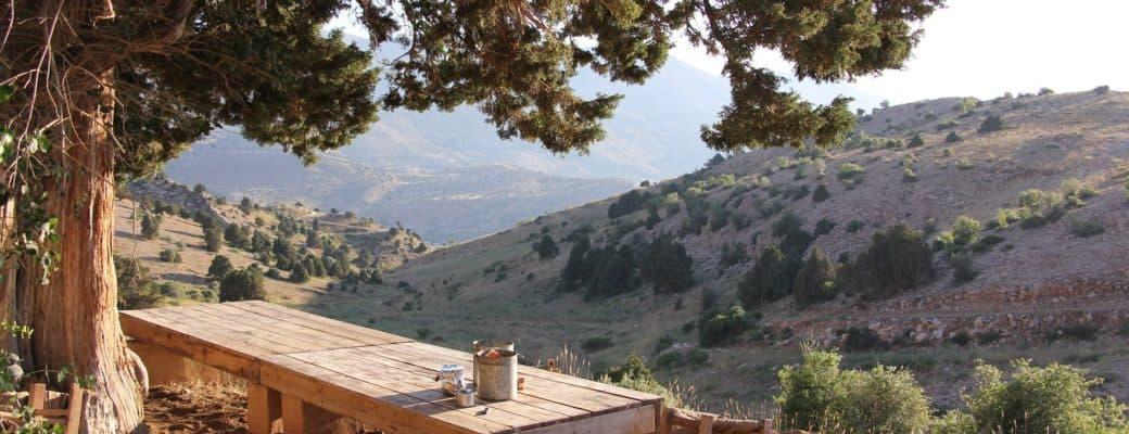 Libanon Staat Op Het Punt De Cannabisteelt Te Legaliseren