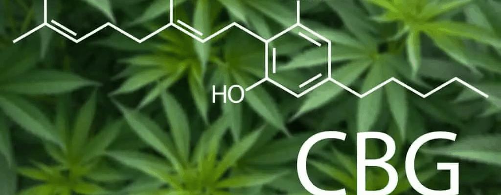 Cannabinoïde CBG Heeft Antibiotische Eigenschappen