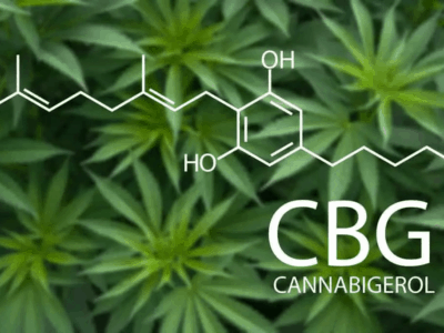 Kanabinoid CBG ima svojstva antibiotika