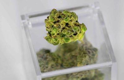 2020-04-24-Wat-kan -Europa-leren-van-de-Duitse-benadering-van-cannabisbeleid