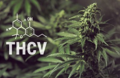 Is THCV Psychoactief?