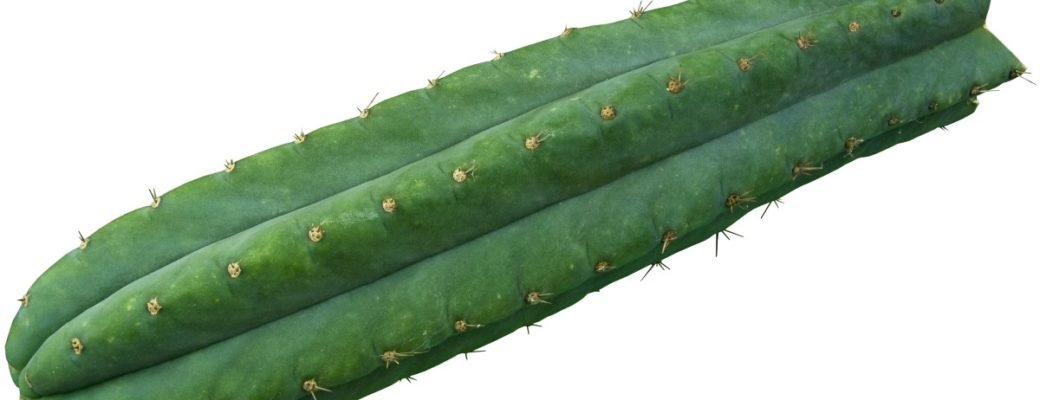De San Pedro Cactus: Achtergrond En De Effecten