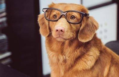 Educatie Is Essentieel Wanneer Je Hennep Olie En CBD Voor Huisdieren Op De Markt Wil Brengen.