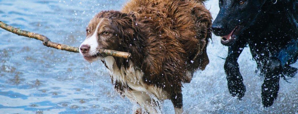CBD smanjuje simptome artritisa kod pasa