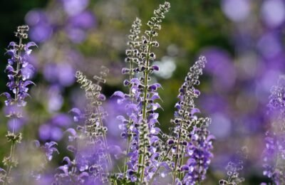 2020-07-03-Wat-is-salvia?