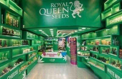 Grote Wietzaden Leverancier Royal Queen Seeds Opent Nieuwe Vestiging: In Marbella!
