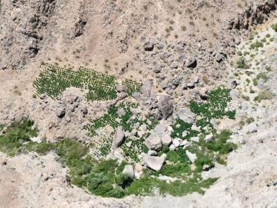 კალიფორნიის უდაბნოში აღმოაჩინეს უზარმაზარი უკანონო კანაფის ბაღები