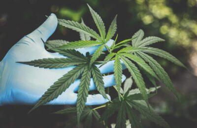 Houston's Forensic Science Center Ontwikkelt Een Test Om Marihuana Te Onderscheiden Van Hennep