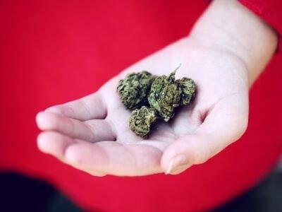 2020-09-25 Petizione sollecita un'assicurazione sulla cannabis medica per i canadesi
